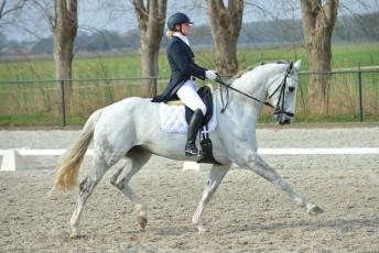 mooie-uitgesrekte-draf-Zilver-hulten-29.03.14